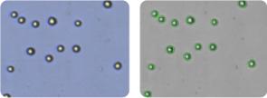 M-14 cells