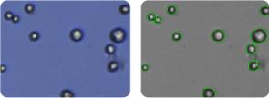 RPMI 8226 cells