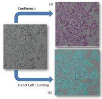 celigo-confluence-vs-direct-cell-counting