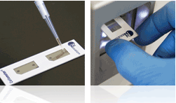 pipette sample and load slide