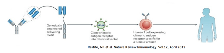 Restifo, NP et al. Nature Review Immunology. Vol.12, April 2012