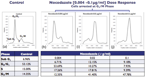 Nocodazole-Induced Cell Cycle Arrest