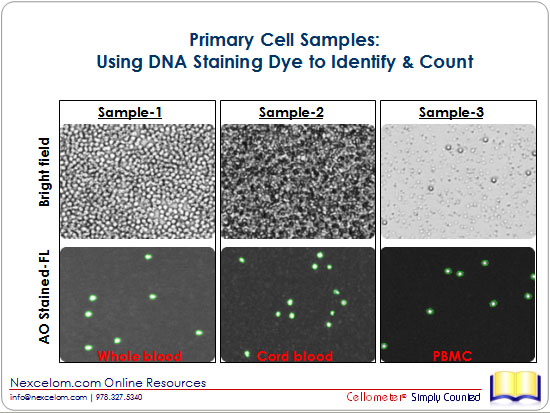 Primary Cell Samples: Using DNA Staining Dye to Identify & Count