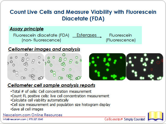 Count Live Cells and Measure Viability with Fluorescein Diacetate (FDA)