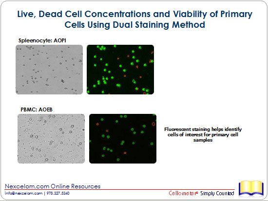Live, Dead Cell Concentrations and Viability of Primary Cells Using Dual Staining Method