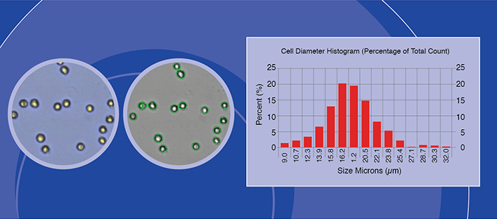 Bright Field Cell Analysis