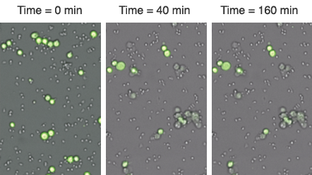 count live tumor cells for each well over multiple time points