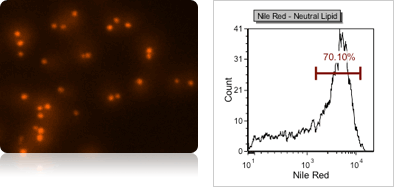 Yeast Neutral Lipid Content using Nile Red Fluorescent Staining