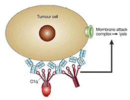 antibody based cancer therapies