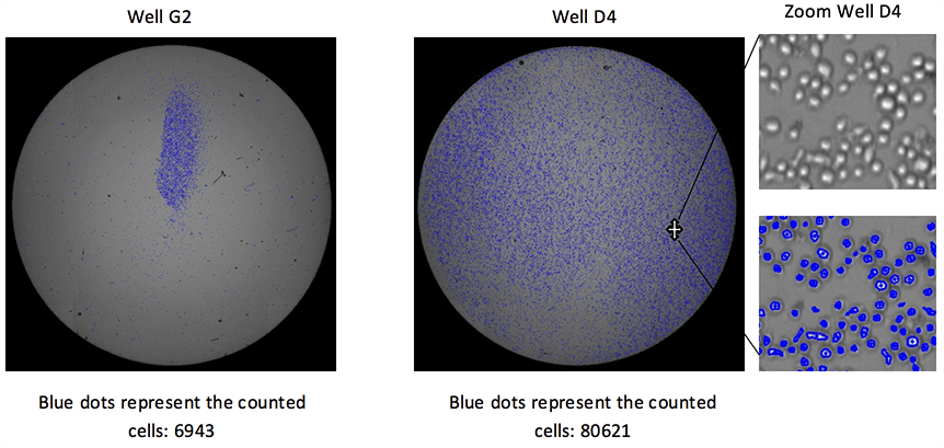 Whole-Well Imaging for Counting of Non-Uniform Cell Populations