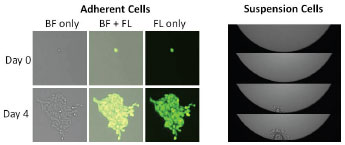 celigo-adherent-and-suspension-cells