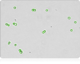 Bright field counted cell image for Data Verification - Cellometer K2, cell viability counter