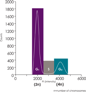 Cell Cycle Histogram