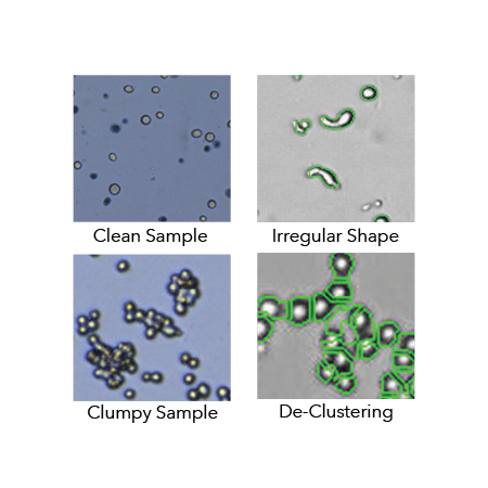 Morphology Variability in Cancer Cell Lines
