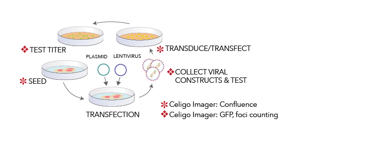 Optimized Viral Vector Development with Image Cytometer