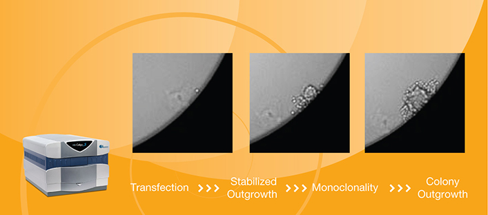 High Quality Imaging and Cell Quantification for Cell Line Development
