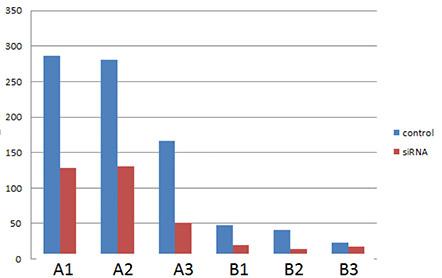 MDA-MB468 cell data following siRNA knockdown
