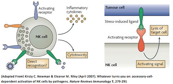 activation of NK cells by pathogens
