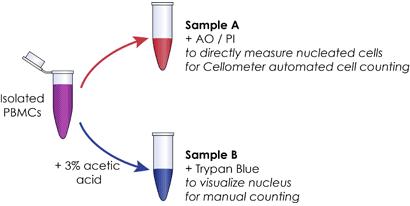 total leukocyte count procedure