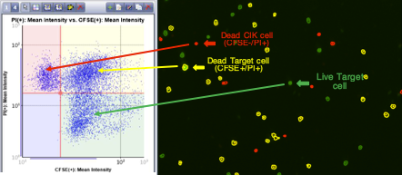 Celigo 3D scatter plot cell FL intensity