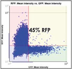 GFP vs. RFP Scatter Plot 45%