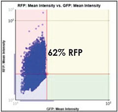 GFP vs. RFP Scatter Plot 62%