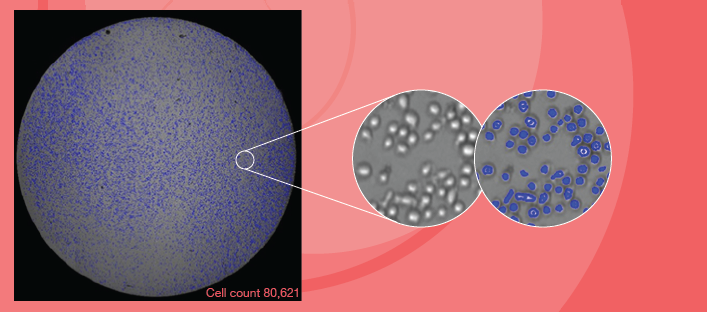 Direct Cell Counting of Adherent & Suspension Cells