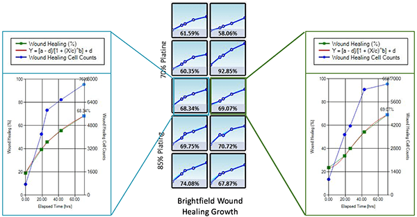 Wound Healing Quantification of Labeled H1299 Cells