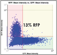 GFP vs. RFP Scatter Plot