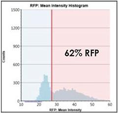 RFP Intensity Histogram