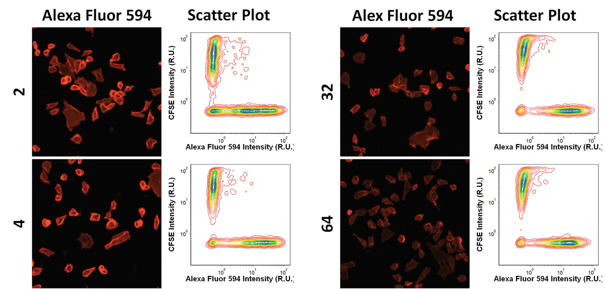 Example fluorescence images and intensity scatter plots for AF594 and CFSE