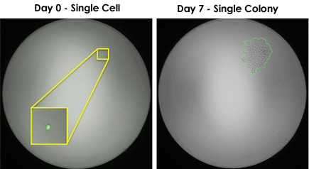 single cell sorting