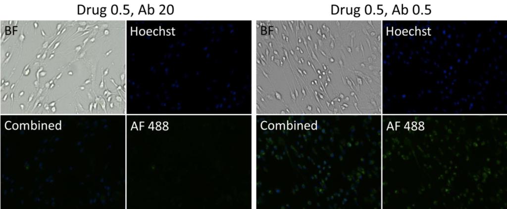 drug treated cells imaged