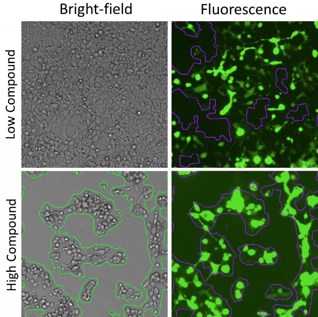 gfp transfection efficiency confluence