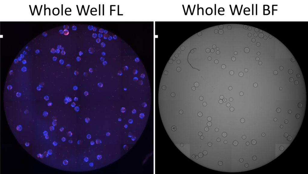 whole 96-well direct cell count images