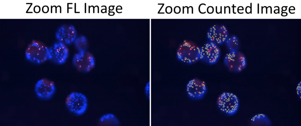 zoomed in direct cell count images