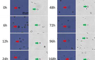 AP/PI vs Trypan Blue for Viability