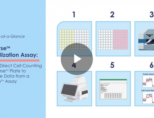 Seahorse™ Normalization Assay at a Glance