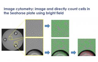 Seahorse data normalization