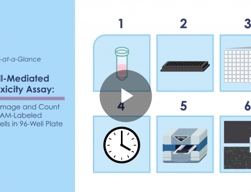 NK Cell Mediated Cytotoxicity Assay at a Glance