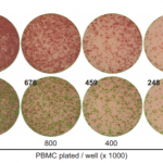 PBMC maximal density for ELISpot is shown