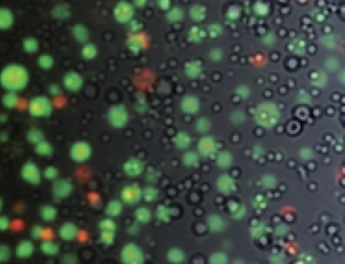 Webinar: Trypan Blue vs Fluorescent Cell Counting