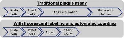 plaque assay workflow