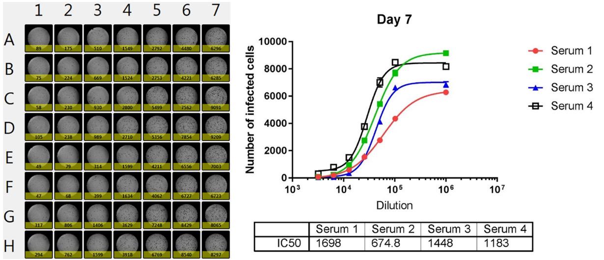 dilution-dependent neutralization plot
