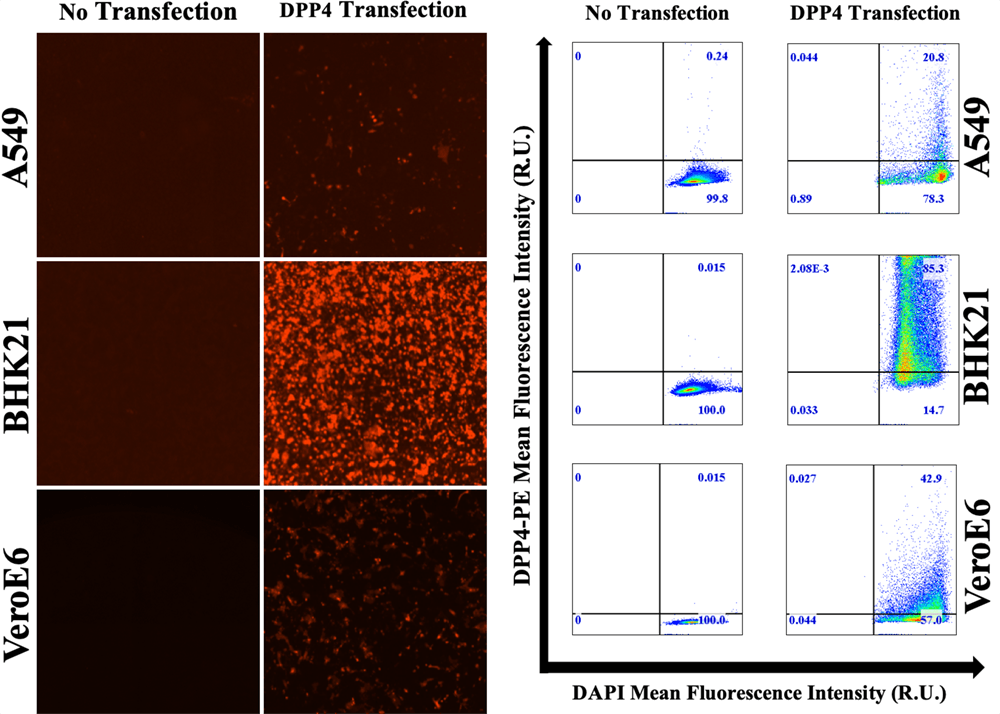 antibody binding intensity histogram