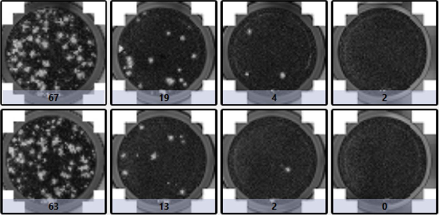 viral plaque formation assay PFA
