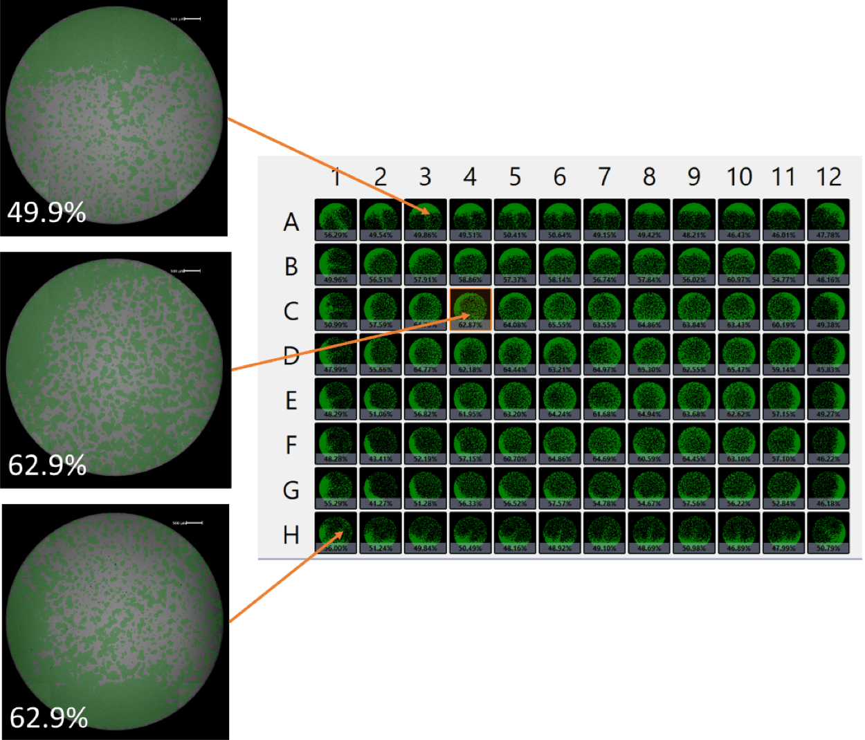 cell confluence for each well
