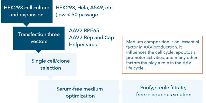 AAV vector development process flow chart