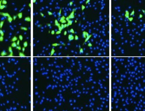 High-throughput Microneutralization Method for Feline Coronavirus