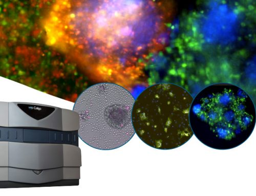 Demo on Demand: Modern Virology Assays Using Image Cytometry